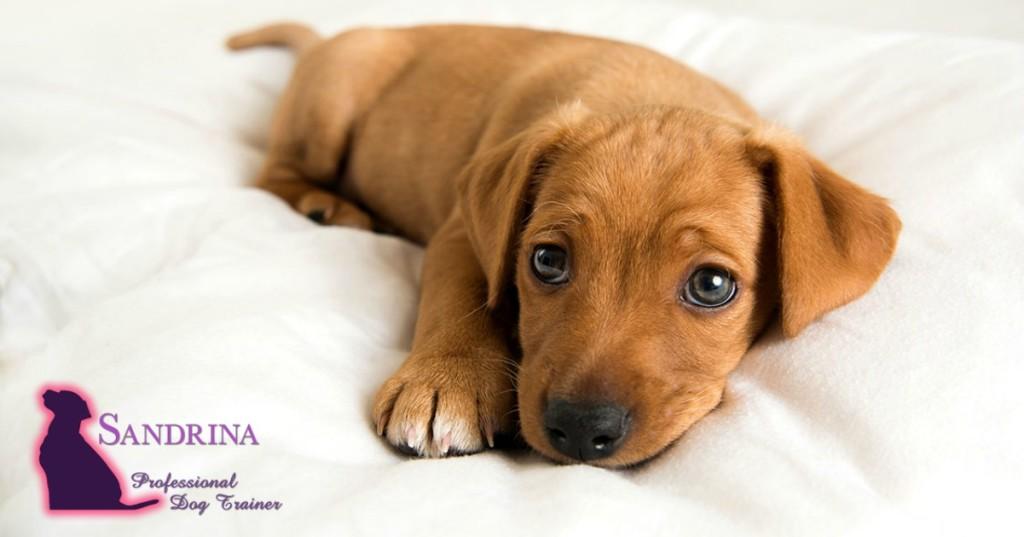choosing-a-puppy